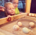 Children at the fair learn about egg hatching at one of the many agricultural exhibits.