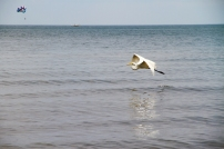 he beautiful waters of Lake Erie can be enjoyed at Cedar Point Beach.
