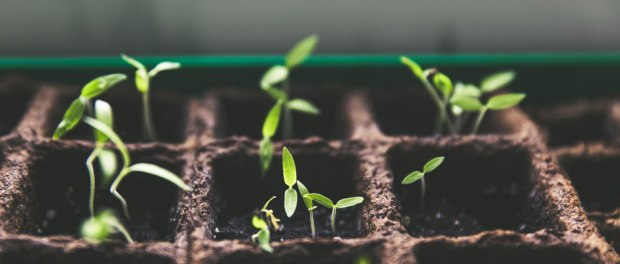 Startup Companies Growth