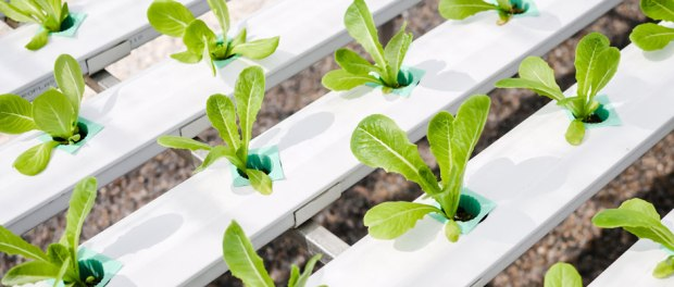 80 Acres Farms Revolutionizes Industry, Brings Farming Indoors